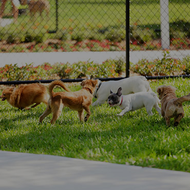 Large Dog Park at The Pointe at Fort Union Apartments